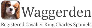 Waggerden Registered Cavalier King Charles Spaniels