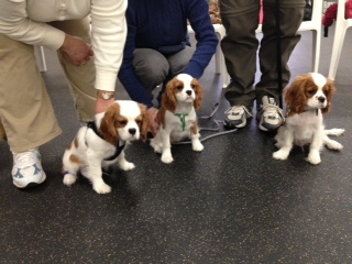 First puppy class (2)