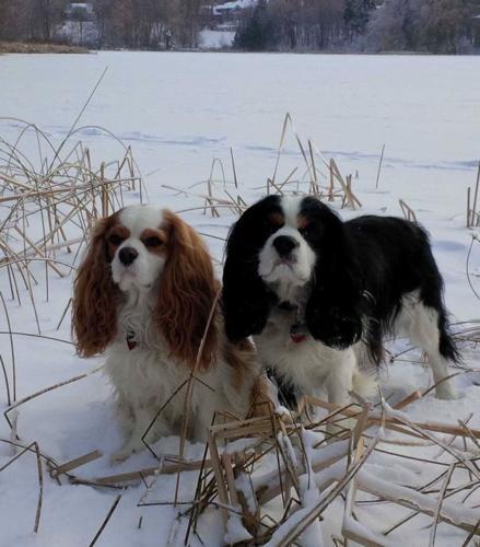 Oscar & Harry, winter