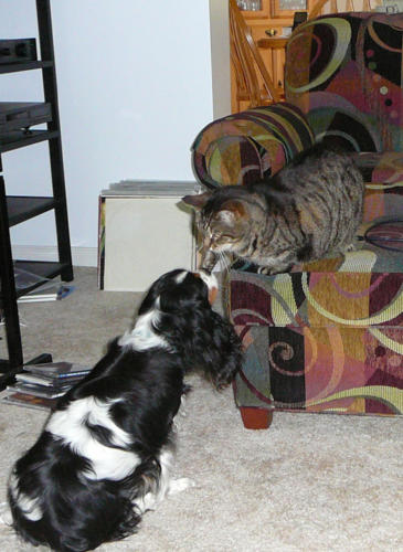 Kinsey and Digger, the cat