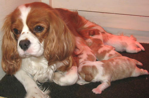 Molly with her puppies
