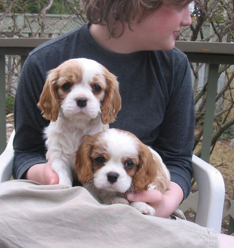 Rosie and Skyler, from Molly's litter